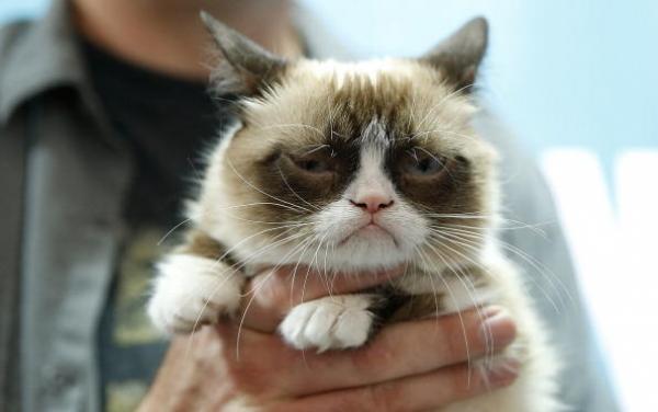 pisica Grumpy