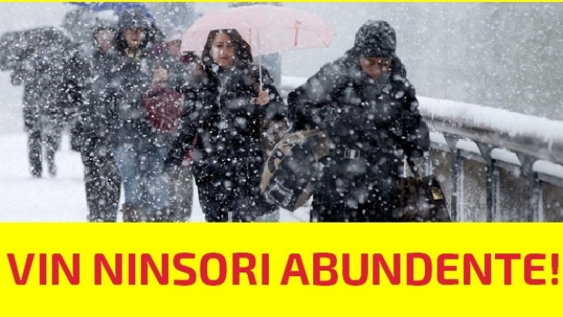 ninsori abundente2